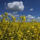 """Salvare l'ambiente con un """"new deal"""" per la sostenibilità"""