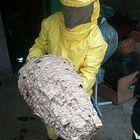 Maxi nido di calabroni rimosso in un magazzino dai vigili del fuoco