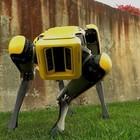 Arriva il cane robot per la famiglia: in commercio dal 2019