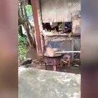 Mettono il cane a bollire in pentola e filmano tutto, il video indigna il web