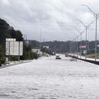 Strade tappezzate da pesci in putrefazione, scatta l'allerta dopo l'uragano Florence