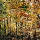 É arrivato l'autunno, la stagione del foliage: ecco perché le foglie cambiano colore