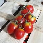 I pomodori con Dna modificato pronti a crescere sui grattacieli e nello spazio