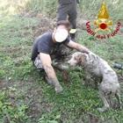 Cane sprofonda nella melma del lago artificiale: Mago salvato in extremis