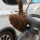 Trovano alveare su un motorino a Roma, le api salvate dai vigili