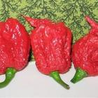 E' il peperoncino piu` piccante del mondo: attenzione quando lo mangiate