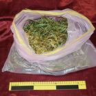 Una serra per la coltivazione della marijuana nella propria camera da letto: giovane arrestato
