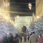 Abeti sul corso Garibaldi,  sarà un Natale green a Benevento