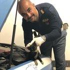 Gattino entra nel motore di una volante, poliziotti lo salvano e lo adottano come mascotte