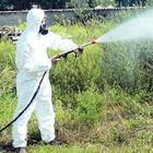 Zanzara tigre, torna l'allarme niente bandi e interventi fermi