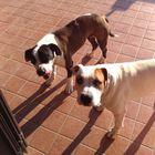 Ex dipendente Fs lascia l'eredità  al cane che gli aveva salvato la vita