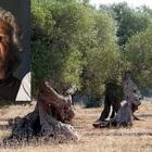 """""""Bufala xylella"""", il commissario Ue risponde a Grillo. Mozione bipartisan in Consiglio regionale: «Denunciamo il comico»"""