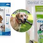 Cani, i veterinari: «Usare dentifrici non specifici può avere conseguenze letali»