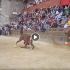 Palio di Siena, cavallo cade e muore: le drammatiche immagini Video