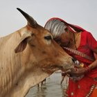 Botte a musulmani sorpresi con carne di mucca: un morto e un ferito grave