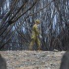 Incendi Australia: per oltre 100 specie metà dell'habitat naturale è andato in fumo