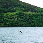 Mostro di Loch Ness, prelevati campioni di dna nel lago: ecco cosa potrebbe essere