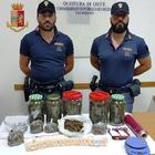 Marijuana tra le balle di fieno: arrestato 39enne