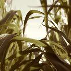 Innovazione nell'Agrifood,  in Campania il 17% delle startup