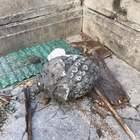 Napoli, cade pigna monumentale accanto al Duomo: «Intervenite»