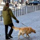 Roma, positivo al coronavirus viola la quarantena e porta a spasso il cane senza mascherina