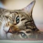Chi l'ha Visto, le fake news sul Coronavirus: «Liberatevi dei vostri animali, avete una vita sola»