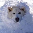 """""""Fa un freddo cane"""": ecco perché si dice così"""