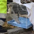 Gattino intrappolato per 16 ore nel motore di un'auto, il salvataggio