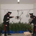 Coltivavano marijuana in un casolare, denunciati due giovani