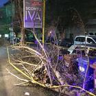 I commercianti addobbano per Natale gli alberi caduti e rimasti a terra