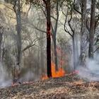Australia, un miliardo di animali uccisi dagli incendi