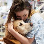 Oltre 10 milioni di animali nelle case degli italiani: sempre più aziende consentono di portarli in ufficio