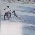 Scimmie all'attacco: un intero villaggio sotto scacco e costretto a chiudersi in casa