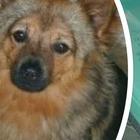 Chicco, il cane scomparso sull'auto rubata a Bari è stato ritrovato: la gioia dei padroni
