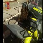Le api assaltano la sacca del postino: la polizia ne aspira 1500 Video