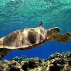 Il miracolo del centro Anton Dohrn: cinque tartarughe tornano in mare