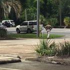 Uomo spara 50 colpi in un complesso residenziale, paura in Florida