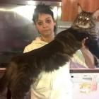Il gatto più lungo al mondo è italiano: si chiama Barivel e vive in Lombardia Foto