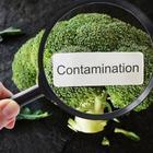 Tossinfezioni alimentari: ecco come conservare i cibi durante l'estate per evitare ogni rischio