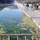 Reggia di Caserta: vasche invase dalle alghe, servizi igienici fuori uso