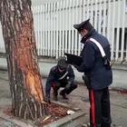 I carabinieri sul luogo della tragedia VIDEO