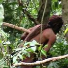 Amazzonia, il video dell'ultimo sopravvissuto di una tribù: tutti gli altri sterminati