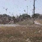 Migliaia di locuste in volo. Lo sciame da vicino come non lo avete mai visto