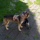 Cani sfregiati dall'acido muriatico. La proprietaria: «Ora abbiamo paura»